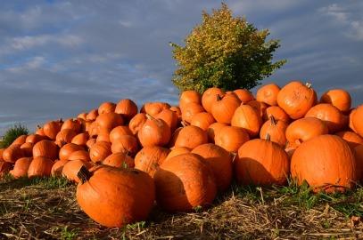 pumpkin-1653011_640
