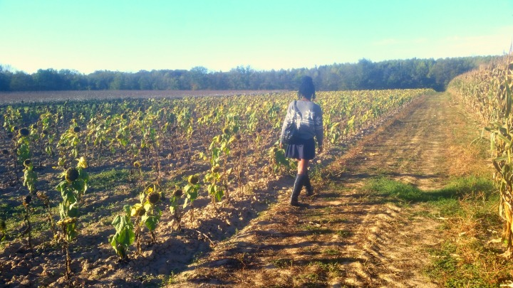 sunflowerfieldss